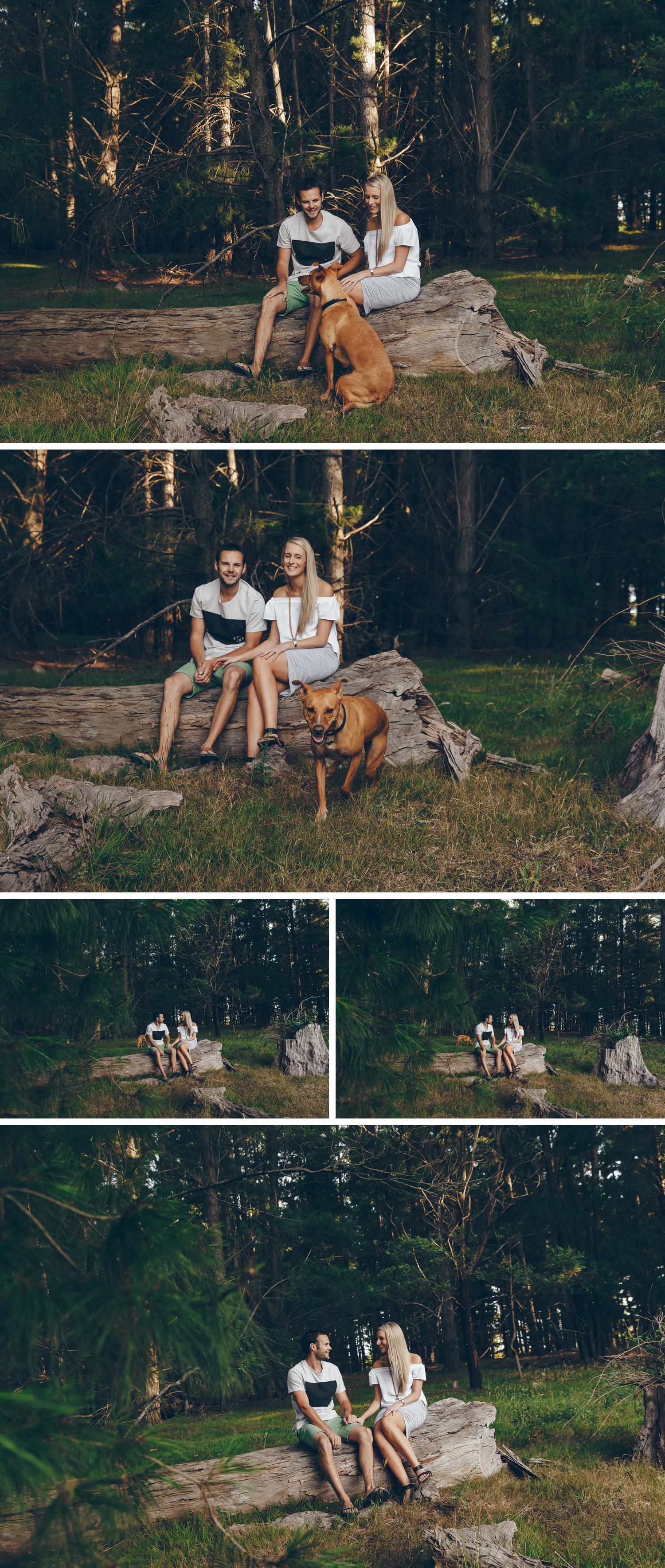 Pine Plantation Gippsland Engagement Shoot, Beautiful Sunset Engagement Shoot Couple Embracing, Beautiful Lighting by Danae Studios