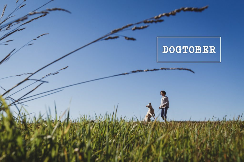 Dog photography in a park, gippsland pet photographer, natural light location photo by danae studios
